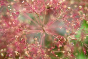 Planticum / Botanicum