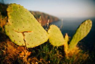 Portrait of a Cactus