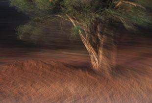 Last Light Tree