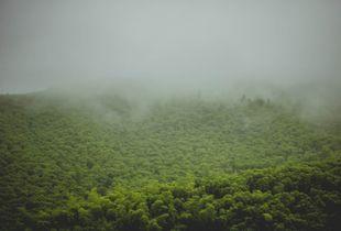A coat of mist