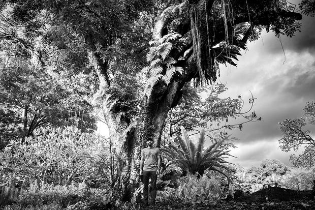JP and Saga - THE TREE PROJECT