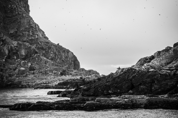 BirdSafari at North Cape