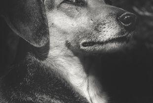 Shelter Dog, No Name