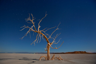 A dead oak tree glows under a full moon in a salt pan on the southern end of the Salton Sea near Niland, California, USA. America's Dead Sea: California's Salton Sea Has Become One Of The Worst Environmental Sites in the USA