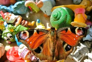 The Visitor - Still Life with Butterfly