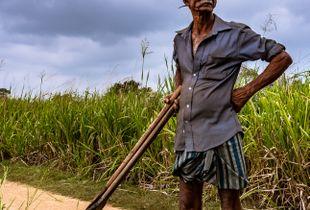 peasantry in Sigirya (2019 Sri Lanka)