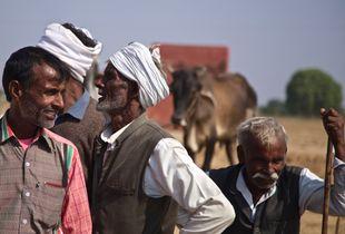 cattle traders, Bateshwar, India
