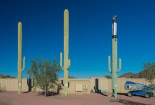 Fauxliage - Three Saguaros