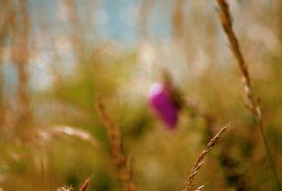Impression - Wild Oats, Zennor Cove