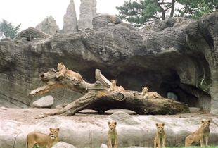Seven Lionesses in Hamburg© Ignacio Evangelista