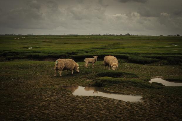 Salt marshes of Lankashire 1