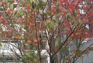 Autumn in Campus