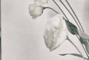 WHITE [ABSENCE]