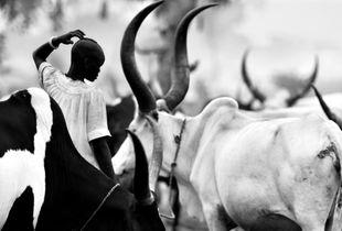 © Michael Freeman A Dinka cattle camp near Rumbek