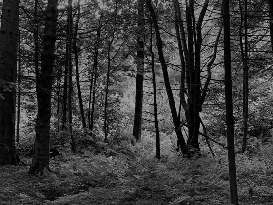English Woods I