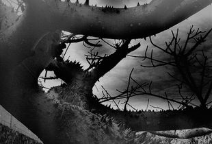 Branches of the Cosmos
