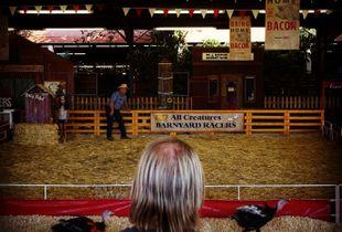 Turkey Race, L.A. County Fair.