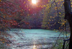 Fairies Pond