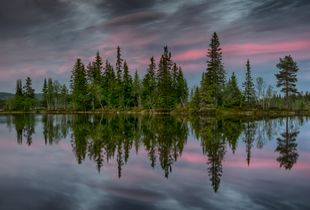 Fir tree reflection.