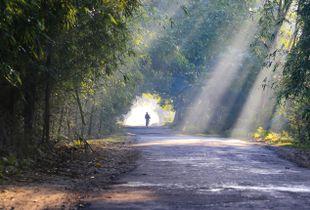 A Morning in Majuli