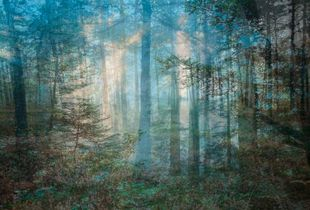 Four Years out of a Death Row Sentence (Forest) © Amy Elkins