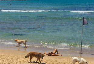 Dogs on a walk in Tel Aviv.