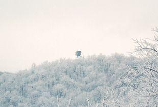 Panorama, Old Tree