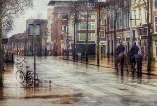 Horses on rainy street
