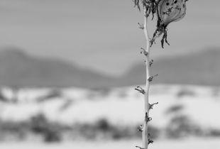 Desert Contrast II