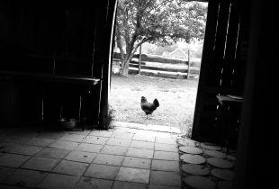Green Gate Chicken