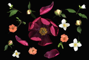 4. composition with red peony