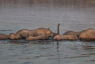 Crossing Chobe
