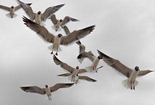 Swarming Behavior