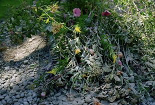 (Once) Wildflowers are cemented