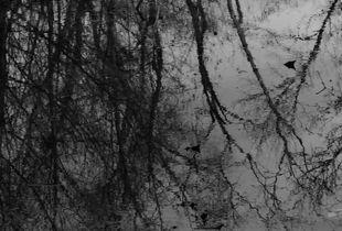 Wet Leaves #8