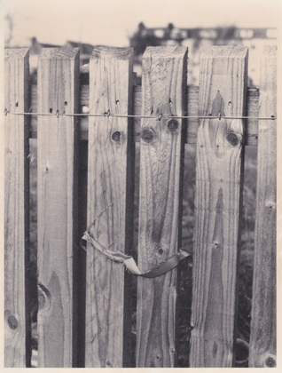 Fence with Silk Ribbon