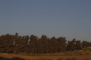 árboles colosos y familia, vista desde las dunas