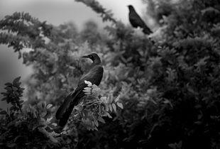 Birds in Tree, Austin, Texas