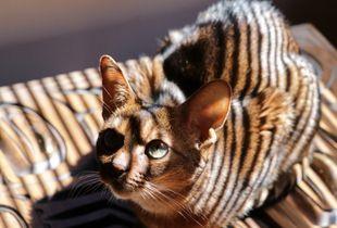 Ruby in stripes