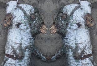 Birch Buddies
