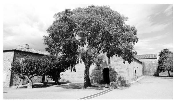 « Abbaye du Thoronet »