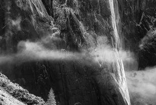 Lone Tree, Yosemite
