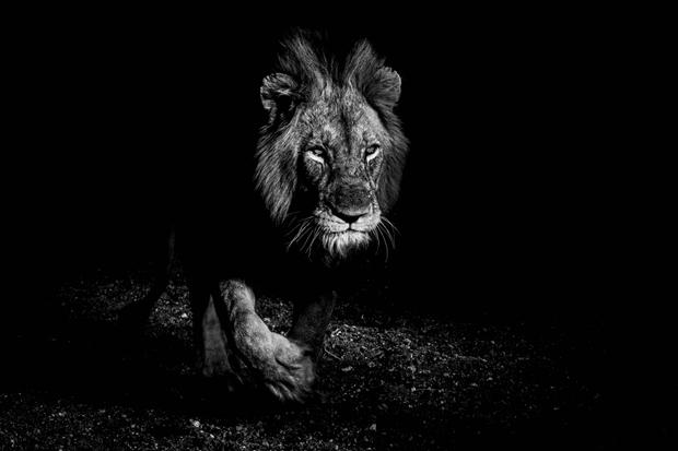Royal Darkness