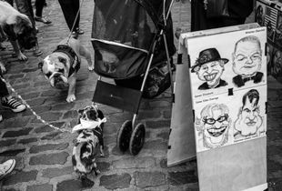 Dogs & Faces