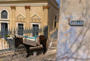 A mule resting in Pyrgos village. Santorini, Greece