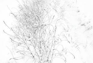 Landscapes enclosed in delicate gossamer phials 01_SC