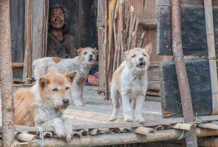Beautiful Women with Jealous Men                                                             Zero Valley, Hong in Arunachal Pradesh, India