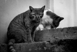 Cat, Old San Juan
