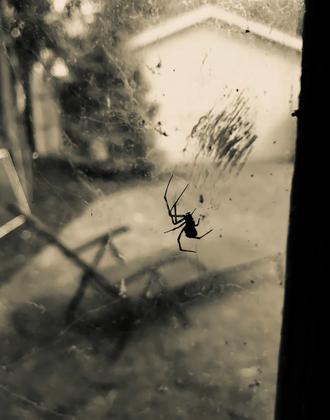 1. Garage Spider