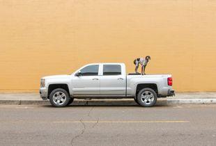Dog on a Pickup